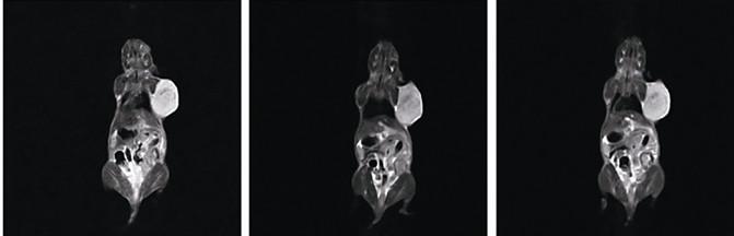 大鼠核磁共振成像儀