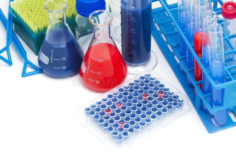 大鼠碱性成纤维细胞生长因子6(bFGF-6)ELISA试剂盒