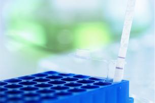 大鼠降钙素基因相关肽(CGRP)ELISA试剂盒